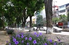 Hà Nội kiểm tra toàn bộ cây xanh trong trường học, bệnh viện, công sở