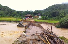 Lào Cai: Mưa lũ làm sập cầu, nhiều cánh đồng bị ngập sâu