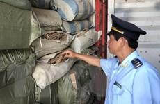 Đà Nẵng: Phát hiện 5 container nghi là dược liệu nhập lậu