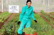 Người Hà Nội rủ nhau bỏ tiền triệu thuê đất trồng rau sạch