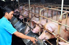 Đề nghị các doanh nghiệp kê khai, giảm giá bán thức ăn chăn nuôi