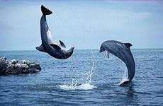 Nhật Bản ngừng đánh bắt cá voi ở Nam Cực