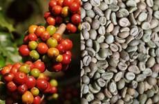 Một tuần giảm giá của thị trường nông sản thế giới