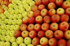 Lệnh cấm vận thực phẩm của Nga khiến nông dân Bỉ lao đao
