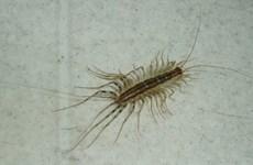 Côn trùng đã có mặt trên Trái Đất từ 480 triệu năm trước