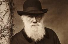 """Các nhà khoa học đã tìm ra lời giải cho """"thế lưỡng nan của Darwin""""?"""