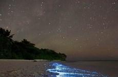 """[Photo] """"Báu vật"""" thế giới tuyệt đẹp ẩn giấu dưới đại dương - Kỳ 1"""