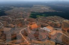 Thủ đô mới của Indonesia dự kiến sẽ thu hút khoảng 1,5 triệu dân