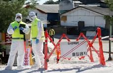 Triều Tiên không phát hiện virus tả lợn trong nước sông vùng biên giới