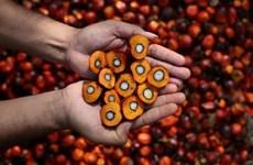 Indonesia sẽ kiện EU trước những lo ngại về ngành công nghiệp dầu cọ