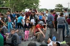 Vấn đề người di cư: Số người di cư bị Mỹ bắt giữ lên mức kỷ lục