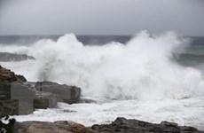 Nhật Bản: Siêu bão Habigis gây nhiều thương vong và thiệt hại