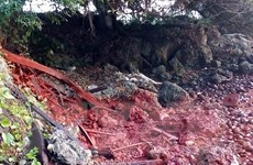 Papua New Guinea đóng cửa nhà máy của Trung Quốc sau sự cố tràn bùn