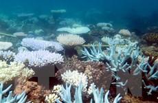 Độ bao phủ của rạn san hô Great Barrier giảm mạnh hơn cảnh báo