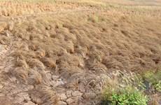 LHQ cảnh báo khủng hoảng lương thực tại Vành đai khô hạn Trung Mỹ