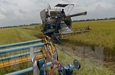 Các nhà xuất khẩu gạo Thái Lan ủng hộ lệnh cấm 3 hóa chất độc hại