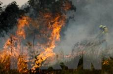 Chuyên gia cảnh báo Australia đối mặt với nguy cơ cháy rừng tồi tệ hơn
