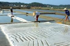 Thời tiết thuận lợi, diêm dân Quảng Nam được mùa muối