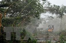 Trung Quốc tiếp tục báo động cao nhất đối với bão Rammasun