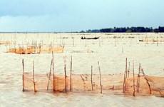 [Photo] Đánh bắt cá linh trong mùa nước nổi tại ĐBSCL