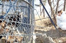Hàn Quốc cấm đi lại, vận chuyển đối với các trại chăn nuôi