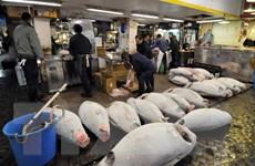 Hàn Quốc cân nhắc bỏ lệnh cấm nhập khẩu hải sản từ Nhật Bản