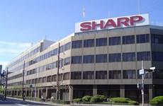 Giá cổ phiếu của Sharp rớt giá sau dự kiến báo cáo thua lỗ