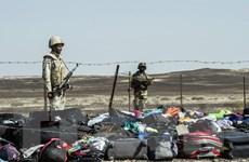 Vụ rơi máy bay ở Ai Cập: Các thông tin gây nhiễu loạn điều tra