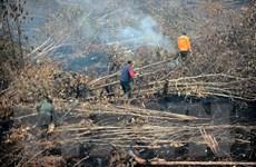 Nắng nóng khiến nguy cơ cháy rừng tăng cao tại Australia
