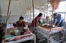 Brazil thử nghiệm giai đoạn cuối vắcxin phòng sốt xuất huyết
