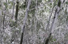 Vĩnh Phúc: Băng tuyết vẫn phủ trắng nhiều ngọn núi ở Tam Đảo