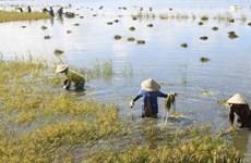 MDEC-Vĩnh Long 2013 sẽ hướng đến nền kinh tế xanh