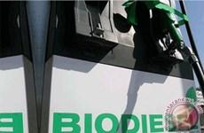 EU áp thuế phá giá diesel sinh học từ Argentina, Indonesia