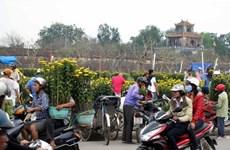 Hoa Tết ngập tràn khoe sắc tại Huế sau ngày nắng nhẹ
