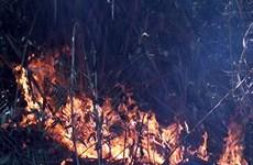 Một đám cháy bùng phát tại Vườn quốc gia Hoàng Liên