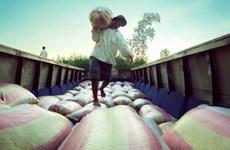Phú Yên kịp thời cấp phát gạo cho người dân lúc giáp hạt