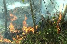Hơn 25.000ha rừng ở Khánh Hòa có nguy cơ bị cháy cao