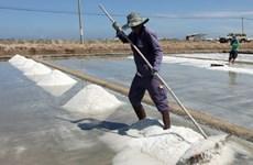 Diêm dân Bình Thuận phấn khởi vì được vụ muối
