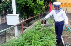 Chuyển giao kỹ thuật trồng rong nho biển cho Trường Sa