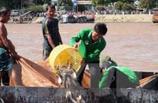 Tổ chức thả nhiều tôm, cua giống xuống vùng biển Cà Mau