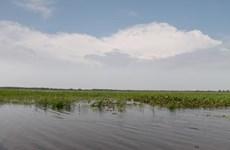 Ưu tiên bảo tồn 8 loại thực vật ở Vườn Quốc gia Tràm Chim