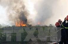 Quảng Ngãi: Cháy rừng do bất cẩn, hai người nhập viện