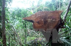 Quảng Nam: Khởi tố vụ phá rừng quy mô lớn tại huyện Nông Sơn