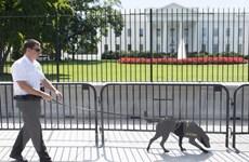 Nhà Trắng yêu cầu Cơ quan mật vụ giải trình về lỗ hổng an ninh