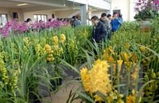 Hà Nội đầu tư 41 tỷ đồng phát triển hoa, cây cảnh chất lượng cao