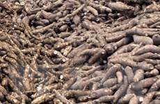 Phú Thọ: Công ty sắn Sơn Sơn gây ô nhiễm nghiêm trọng