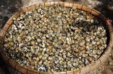 Hà Tĩnh: Xác minh loại ốc lạ khiến ba ngư dân tử vong sau khi ăn