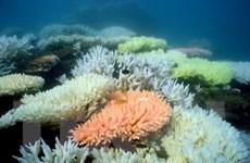 Rạn san hô Great Barrier có nguy cơ trở thành bãi rác thải