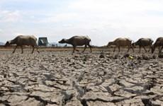 Nông dân Đồng Nai đào giếng khắp nơi vẫn phải mua nước sinh hoạt