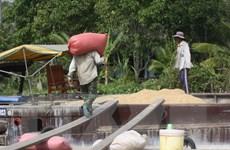 Cơ bản hoàn thành chỉ tiêu thu mua tạm trữ 1 triệu tấn quy gạo
